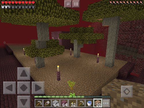 Successfully grown acacia trees in the nether